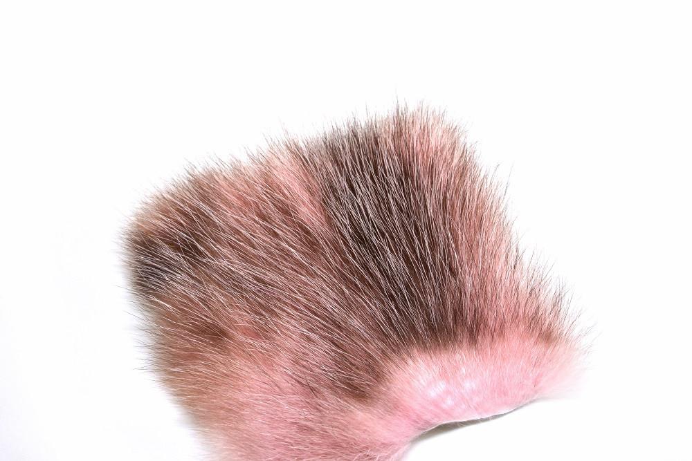 American Opossum