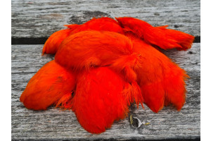 Short Rooster Feather Orange